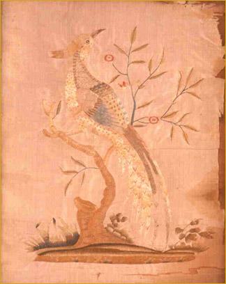 A Golden Pheasant